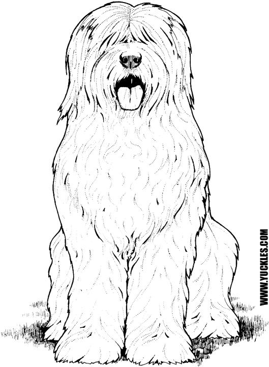 Old English Sheepdog Coloring Page By YUCKLES