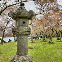 Walking-along-the-Japanese-Garden-at-the-Tidal-Basin