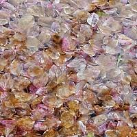 A-big-lake-full-of-petals