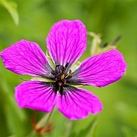 Lone-purple-flower