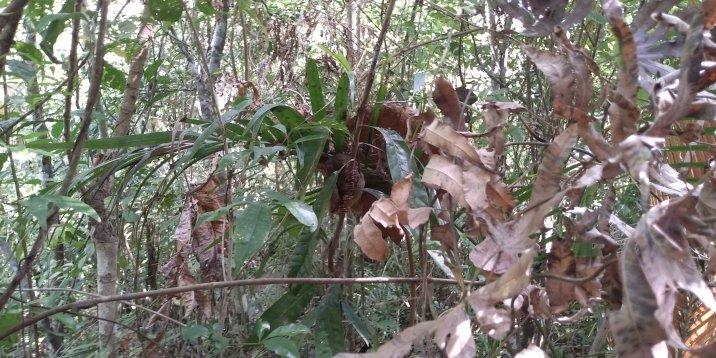 Infinix Hot S3 tarsier