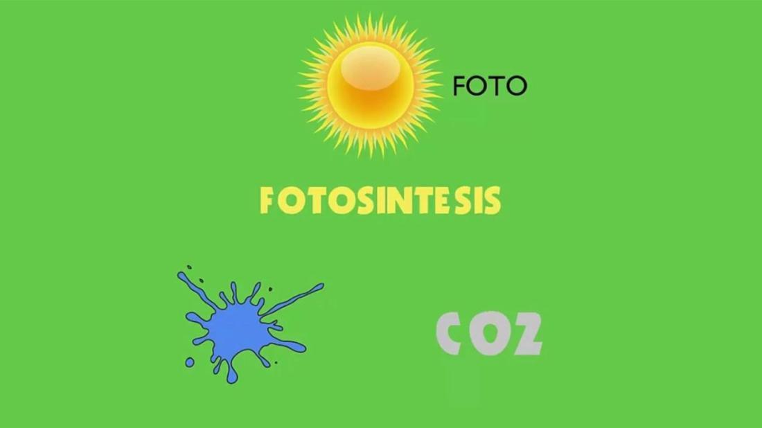 Manfaat Matahari Sebagai Proses Fotosintesis