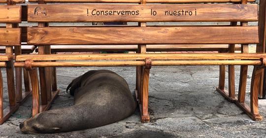 Un mois d'aventure en Équateur – Chapitre 1 – San Cristobal, Galápagos