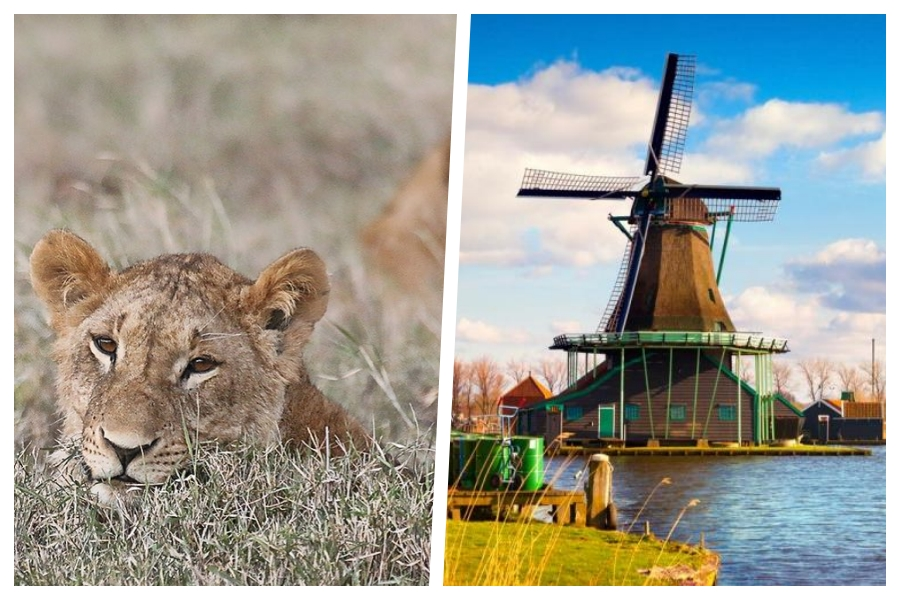 2 for 1 trip ! Fly to South Africa and Amsterdam starting at only $933 from Montreal