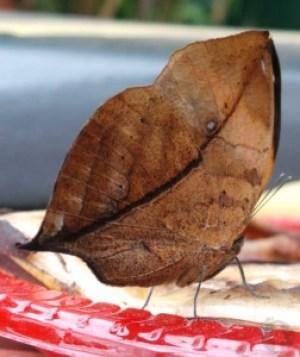 Bladvlinder