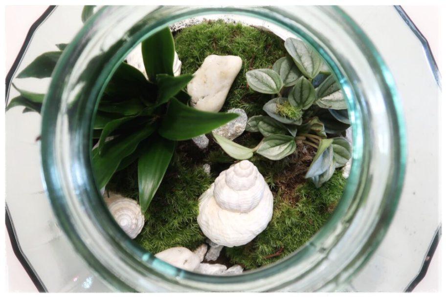 Meet my new Plant Rebelz | Terrarium