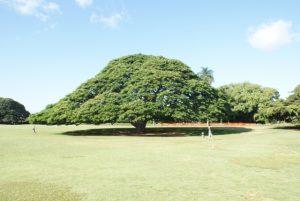 この木なんの木イメージ