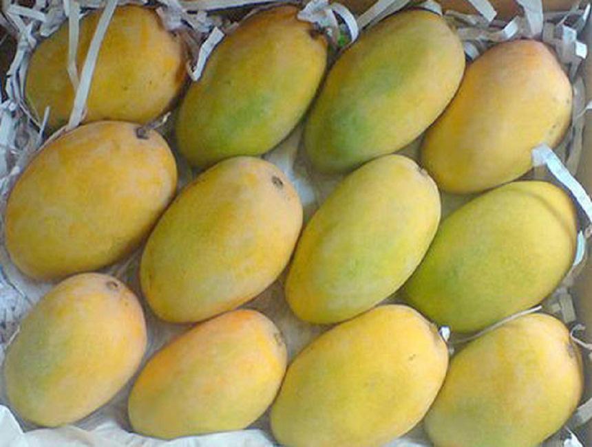 Fresh Direct Kesar Mango