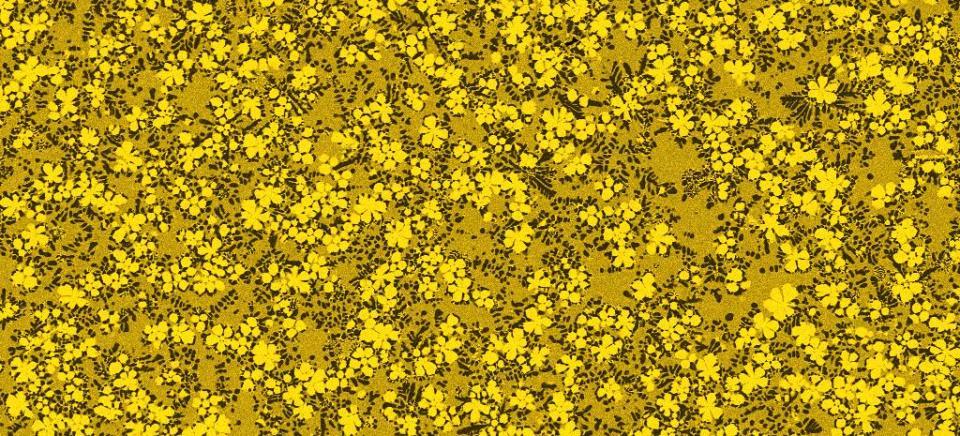 RC4_03-gelb-paysage