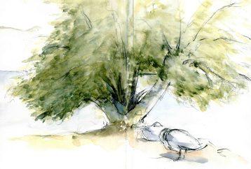 Vidy-arbre-1800