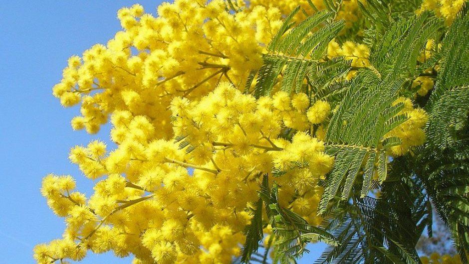 Biancavilla. Otto marzo fra prevenzione e bellezza