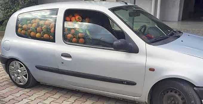 Ramacca, denuncia per 5 persone per furto di 4 tonnellate di arance