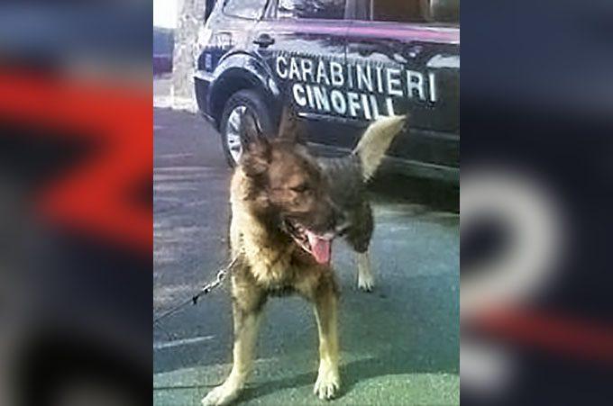 Misterbianco, spacciatore arrestato da cane carabiniere