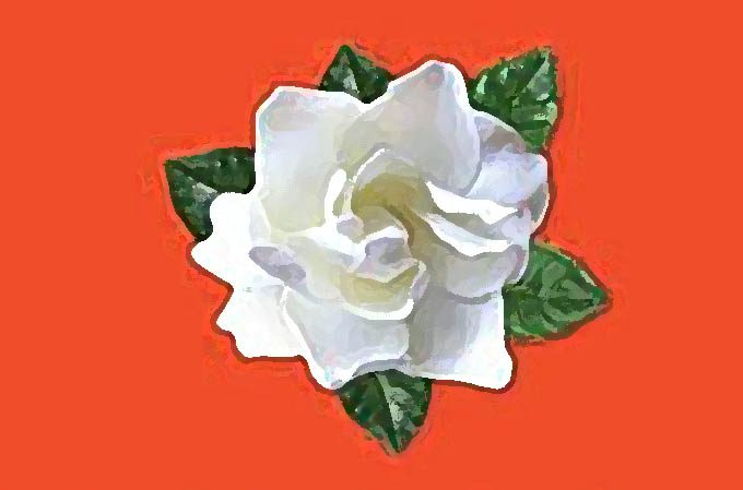 """Belpasso: domani al via """"La Gardenia di Aism"""" contro la sclerosi multipla"""