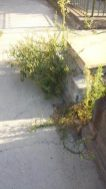 paternò_degrado_cimiteri_04_09_2017_05