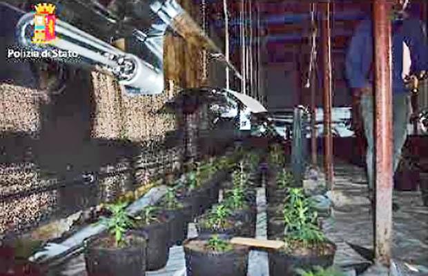 Ragalna. Arrestato 53enne per piantagione di cannabis