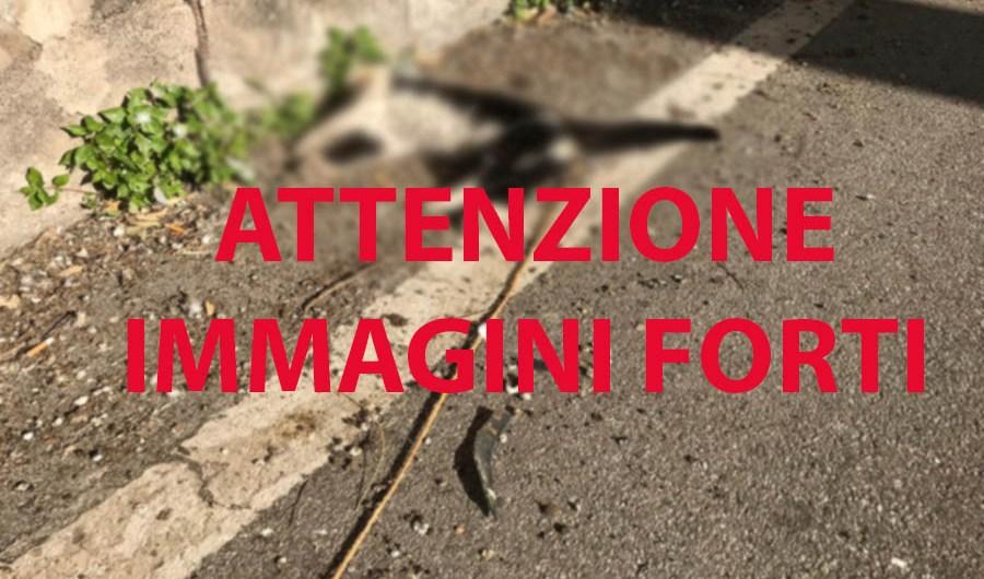 Galleria fotografica: gatto impiccato a Santa Maria di Licodia