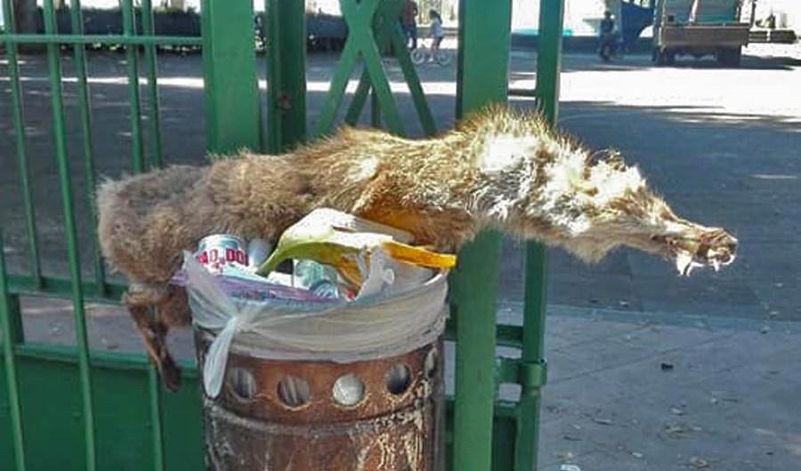 """Santa Maria di Licodia. Carcassa di animale al """"Belvedere"""""""