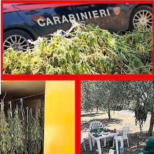 Belpasso. Droga, colpo ai clan: sequestrati 70 chili di marijuana, arrestati 4 paternesi
