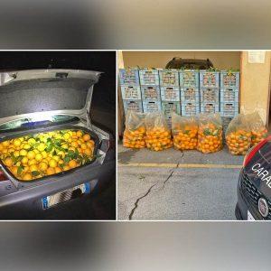 Paternò. Recuperata una tonnellata di arance rubate: una denuncia