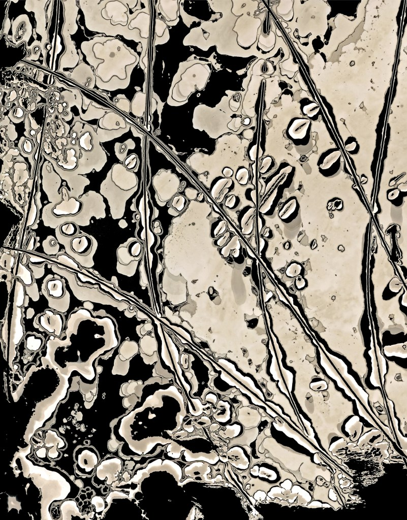 Yvonne Behnke chemigram cameraless photography