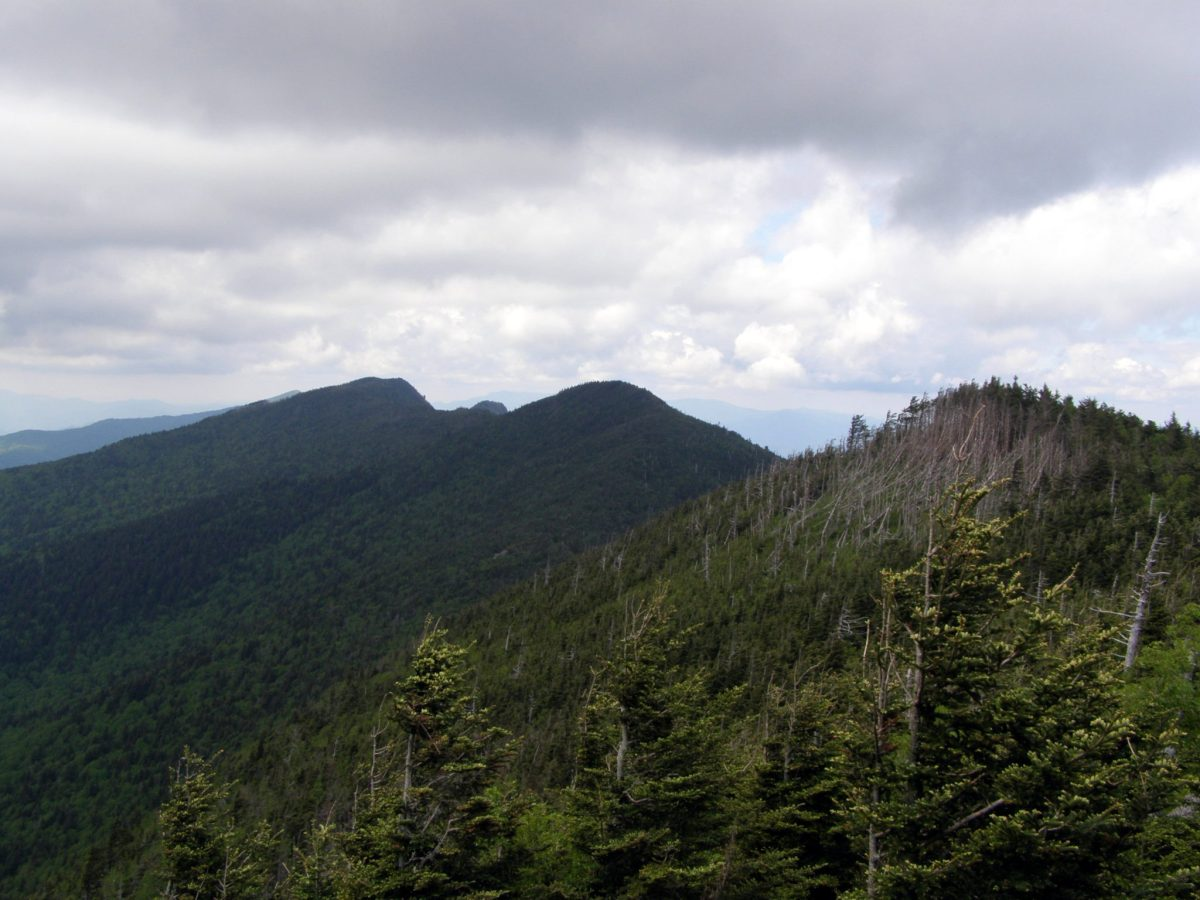 Maple Camp Bald and Mt. Mitchell - Mount Mitchell State Park, NC