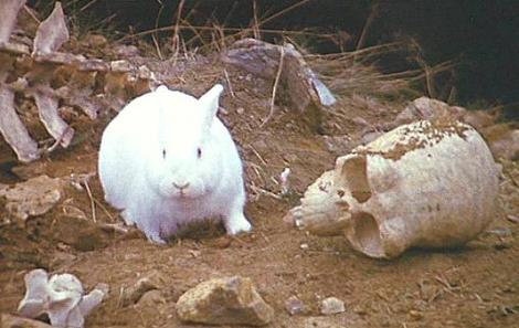 RABBITS Not-so-fluffy Bunnies