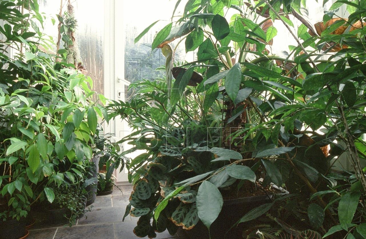 Tropická část zimní zahrady