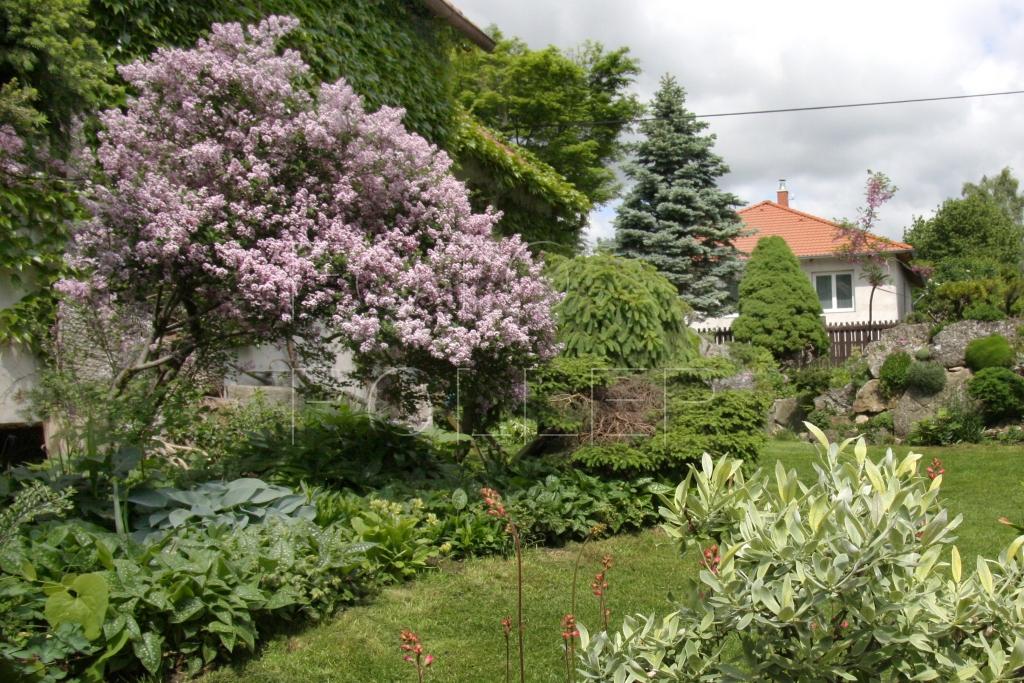 Ve vrcholném jaru se zahradou line vůně šeříků a lýkovců