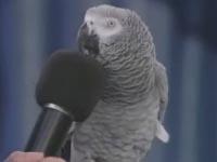 Einstein The Bird