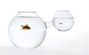 web-fishbowl-xs-or-xl