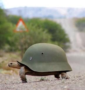 tortue-casque
