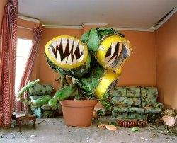 plante-carnivore