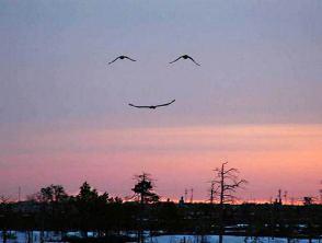 smiley oiseaux