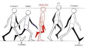 cycle de marche coté