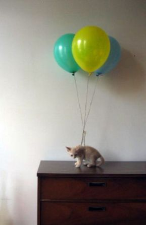 chat vole