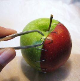 pommes art