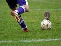 chat foot