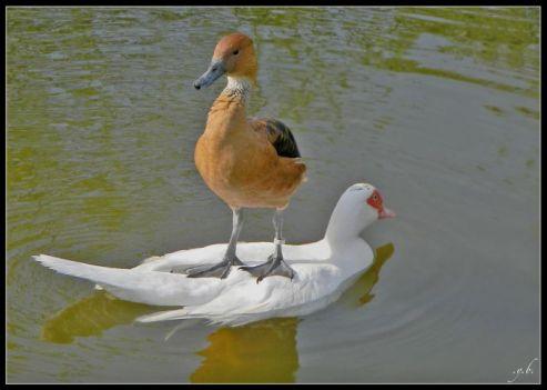 transport canard