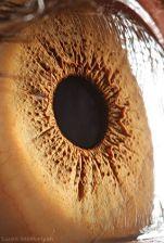 your_beautiful_eyes_17