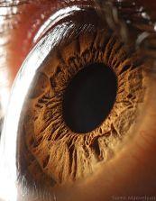 your_beautiful_eyes_18