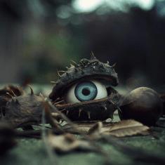 oeil chataigne