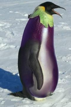 panneau image insolite aubergine pingouin