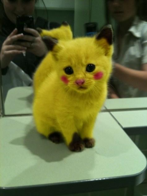 pikachu chaton