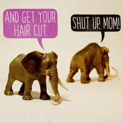 coupe du cheveux mammout