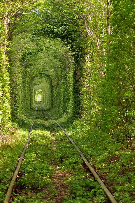 train tunnel arbres