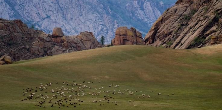 plaine moutons vert