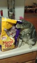 chat tete croquette
