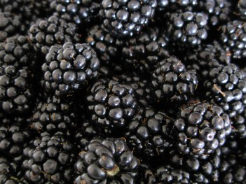 mure-blackberries