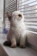 chaton fenetre